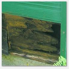 Rotted siding, sub sheeting and rim joist, structural pest inspection
