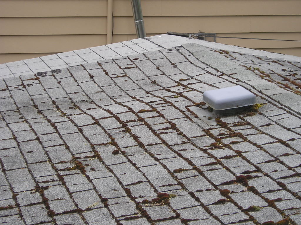 This roof is in very poor condition, soft sheeting and extensive moss